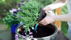 Saksı Bitkilerini Hızlı Geliştirmek İçin Formül