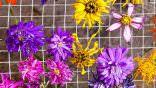 Çiçek Nasıl Kurutulur? Çiçek Kurutma Yöntemleri!