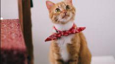 Kedilerde Tüy Dökme Nedenleri Nelerdir? Nasıl Engellenir?