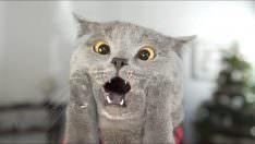 Kedilerin Tuvalet Eğitimi Nasıl Olur?