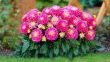Çiçek Nasıl Dikilir? Çiçek Dikmenin Püf Noktaları!