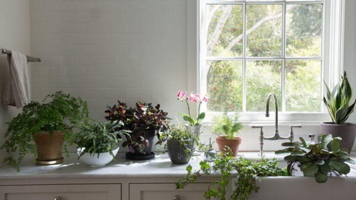 Çiçeklerin Tozu Nasıl Alınır? Evde Çiçek Bakımı