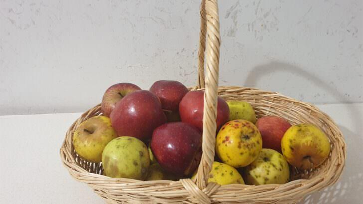 Elma Kompostosu Yapımı Nasıl Olur?