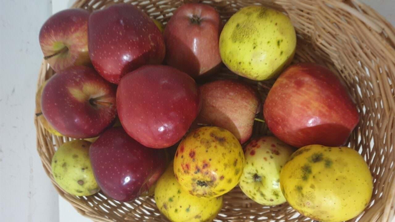 Elma Sirkesi ile Kıvırcık Saç Bakımı Nasıl Yapılır?